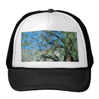 Long-Needled Pine Casting Shadows Trucker Hat