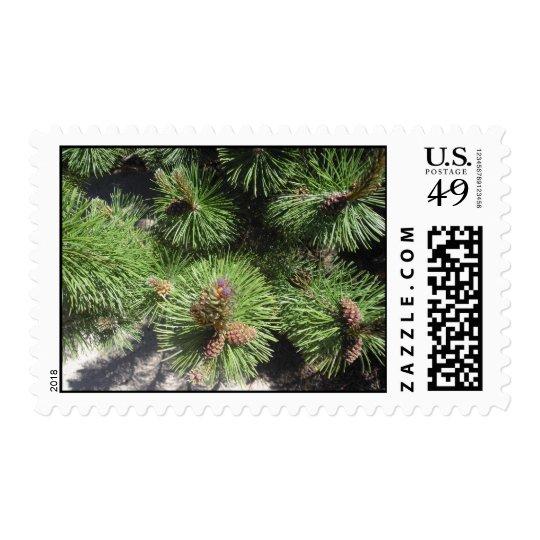 Long Needled Pine Postage