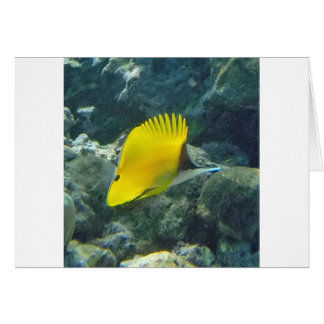 Long Nose Butterfly Fish Card