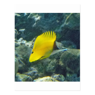 Long Nose Butterfly Fish Postcard