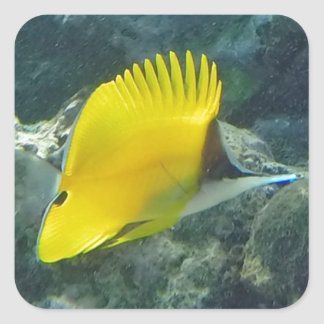 Long Nose Butterfly Fish Square Sticker
