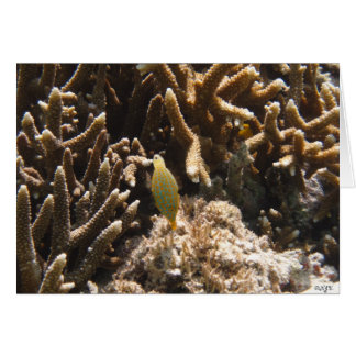 Long Nosed Filefish Greeting Cards