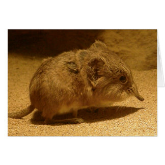 Long-Nosed, Short-Eared Shrew on Sand Greeting Card