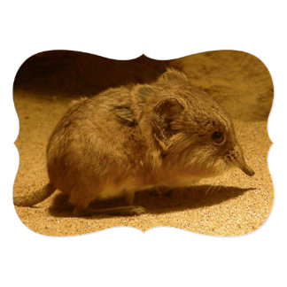 Long-Nosed, Short-Eared Shrew on Sand Card