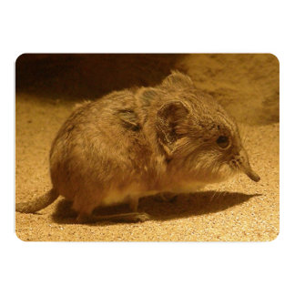 Long-Nosed, Short-Eared Shrew on Sand 5x7 Paper Invitation Card