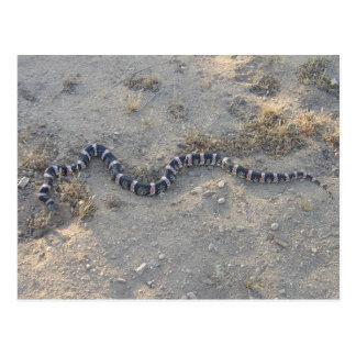 Long-nosed Snake Postcard