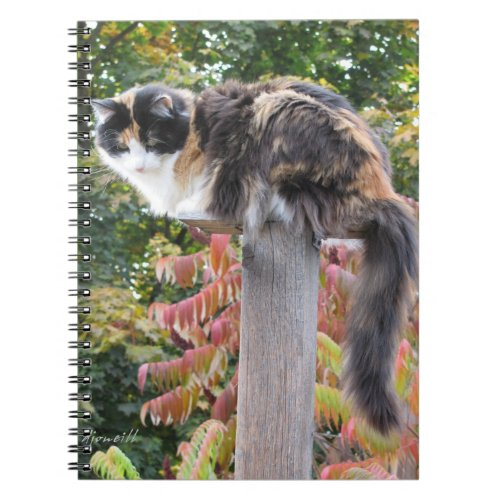 Long tail calico cat notebook