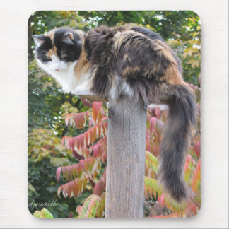 Long Tail Calico Hiding from rocking chairs Mouse Pad