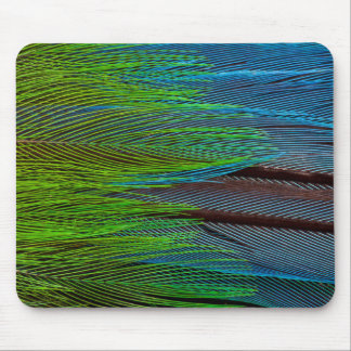 Long-Tailed Broadbill Feather Abstract Mouse Pad