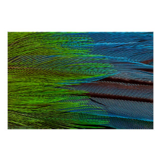 Long-Tailed Broadbill Feather Abstract Poster