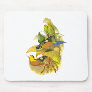 Long-tailed Broadbill Mouse Pad