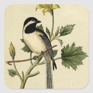 Long Tailed Chickadee Square Sticker