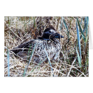 Long-tailed Duck on Nest Greeting Card