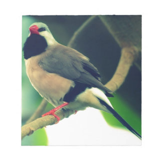 Long-tailed Finch Memo Note Pad
