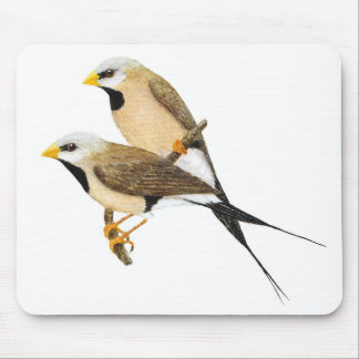 Long-tailed Finch Pair - Poephila acuticauda Mouse Pad