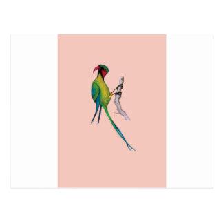 long- tailed parakeet, tony fernandes postcard