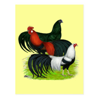 Long-tailed Rooster Trio Postcard
