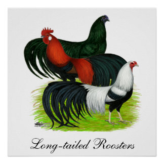 Long-tailed Rooster Trio Poster