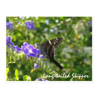 Long-tailed Skipper Postcard