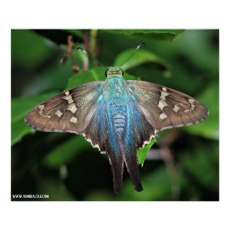 Long-tailed Skipper Poster