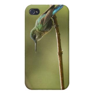 Long-tailed Sylph Aglaiocercus kingi) female, iPhone 4 Covers