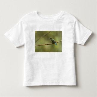 Long-tailed Sylph Aglaiocercus kingi) female, Tee Shirt