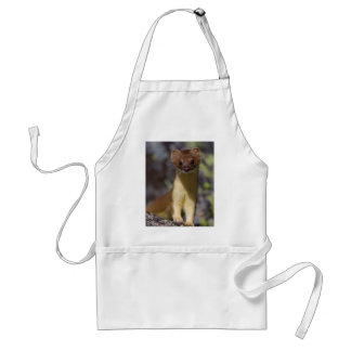 Long-tailed Weasel Adult Apron