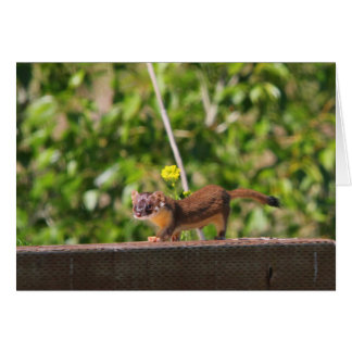 Long-tailed Weasel Greeting Card
