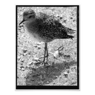Long Time No Sea Photo Print