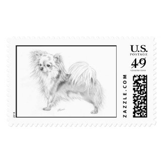 Longcoat chihuahua - standing postage