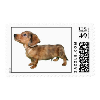 Longcoat Dapple Dachshund Stamp