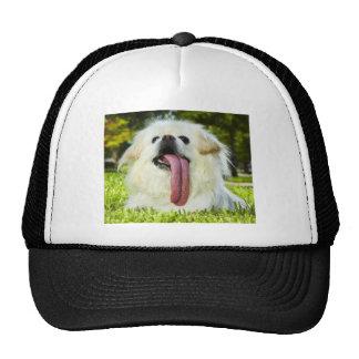 Longest Tongue Trucker Hat