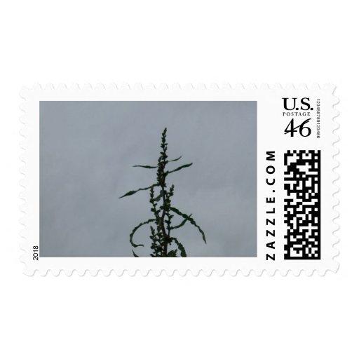 Longevity Stamps
