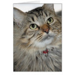 Longhair Brown Mackerel Tabby Greeting/Note Cards