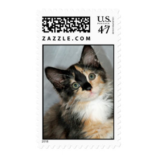 Longhair Calico Kitten Postage Stamps