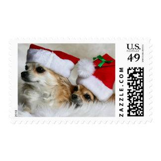 Longhair chihuahuas stamp