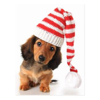 Longhair Dachshund Puppy Postcard
