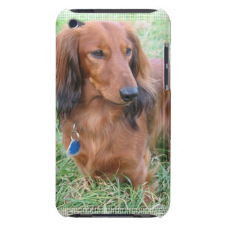 Longhaired Dachshund iTouch Case iPod Touch Case