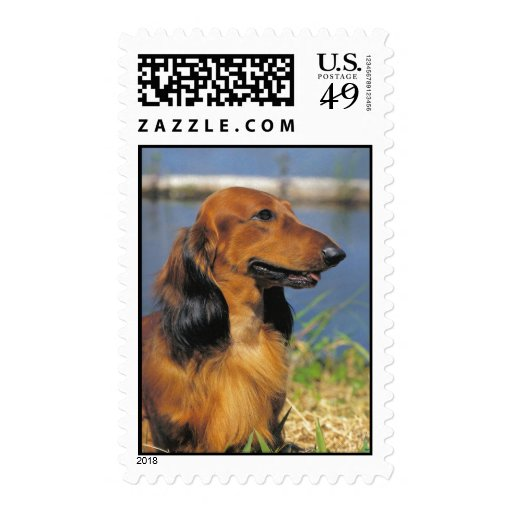 Longhaired Dachshund  postage stamp