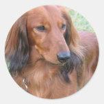 Longhaired Dachshund Sticker