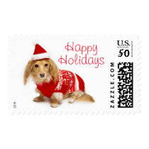 Longhaired dachshund wearing a red Christmas Postage