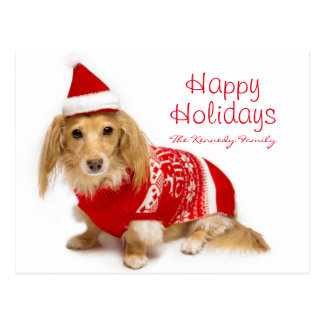 Longhaired dachshund wearing a red Christmas Postcard
