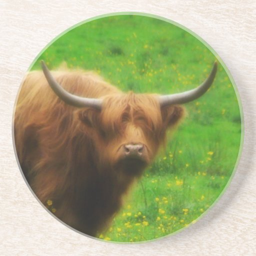 Longhaired LongHorn with Long Horns Coasters