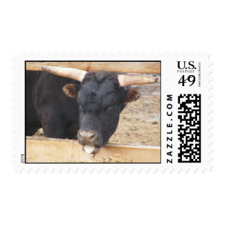 Longhorn Bull with tongue sticking out Postage