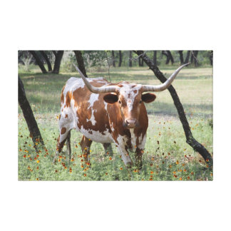 Longhorn Gallery Wrapped Canvas