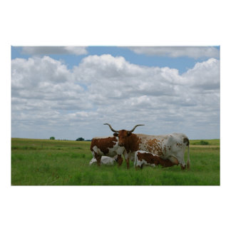 Longhorn Cattle in Kansas Poster
