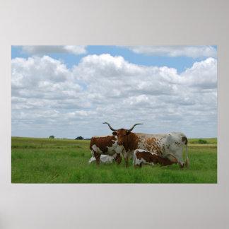Longhorn Cattle in Kansas Poster