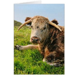 Longhorn cow card