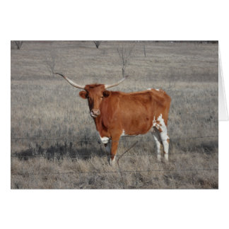 Longhorn Cow Licking Nose Card