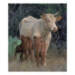 Longhorn Cow Out On The Mesa Poster Print